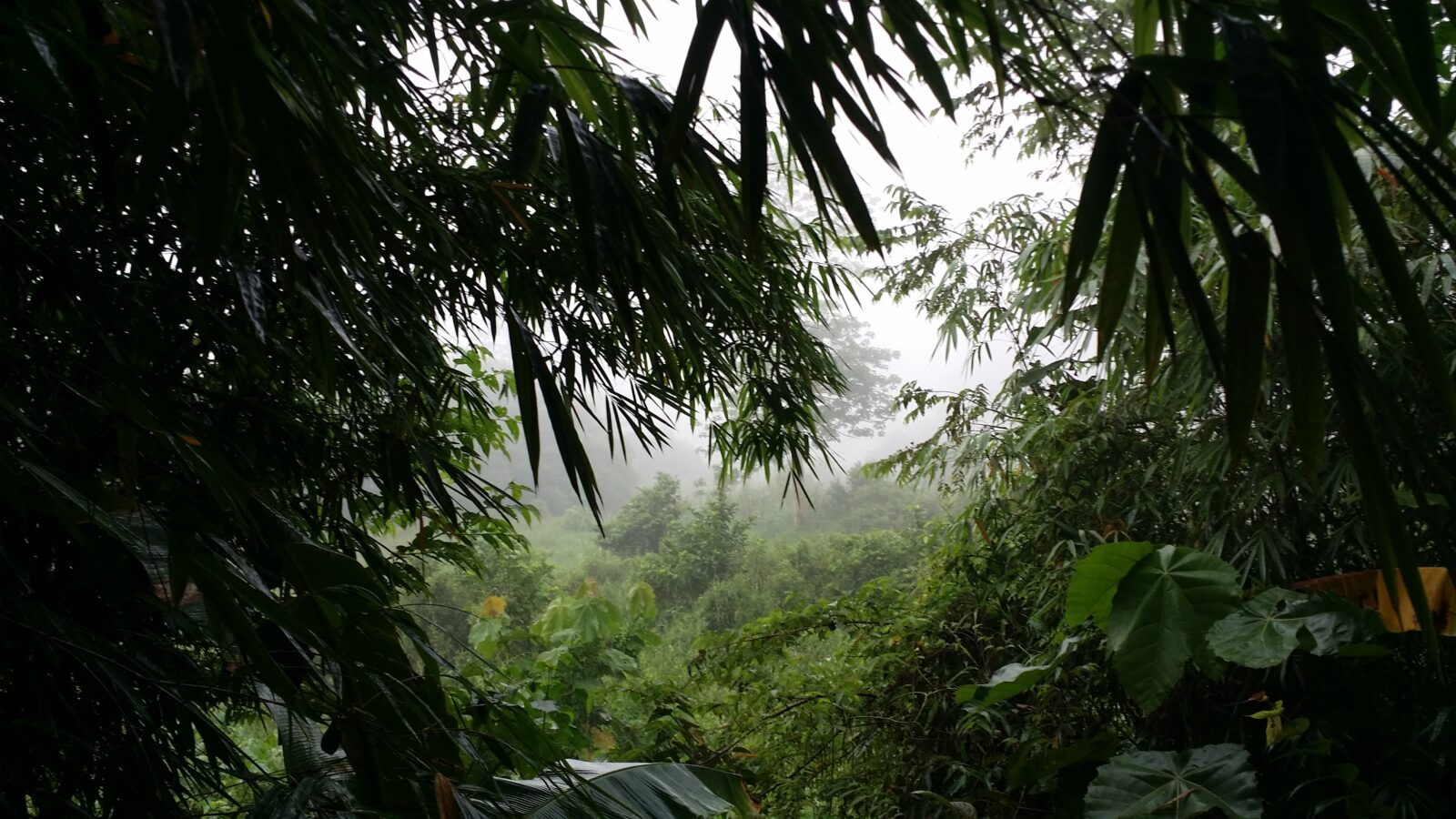 West Kalimatan Borneo
